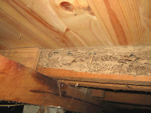 Termite Damage Sub Floor